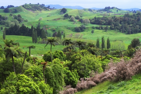 waitomo tour landscape